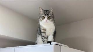 お留守番中に降りられなくなって立ち往生してた猫がこちらです…