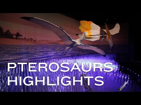 Pterosaurs: Flight in the Age of Dinosaurs Highlights