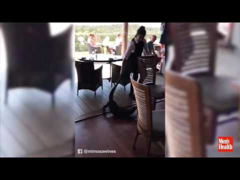 Woman Saves Restaurant from Giant Lizard