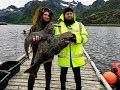 Норвегия. Подводная охота на Лофотенах.