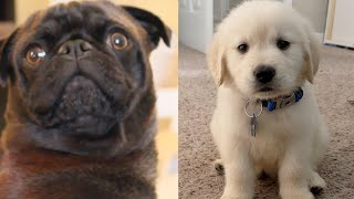 10 Cutest Dogs of YouTubers