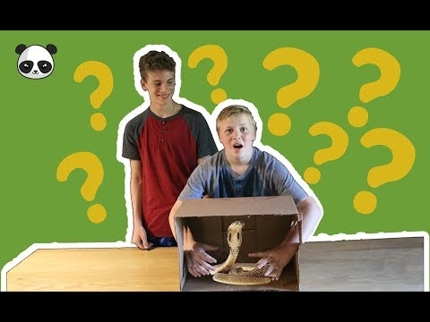 What's in the Box Challenge (WITH LIVE ANIMALS) | Young Panda