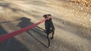 Choosing YOUR Dog breeds: Specialist Vs. Generalist/Allrounder. Patterdale Fell Terriers Estacado