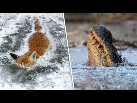 9 Tiere, die in der Zeit eingefroren wurden
