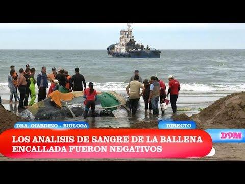 El diario de Mariana - Programa 09/04/18