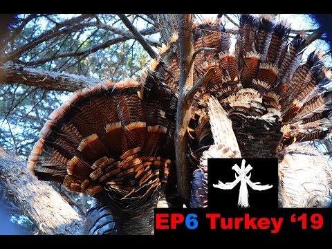 OKLAHOMA PUBLIC LAND TURKEY HUNTING DOUBLE