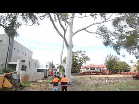 Tree Lopping Brisbane - The DIY Myth