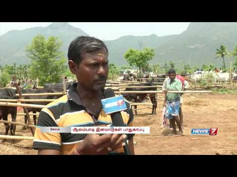 Exhibition of Alambadi cattle in Salem