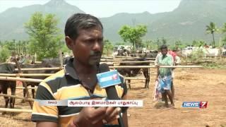 Exhibition of Alambadi cattle in Salem