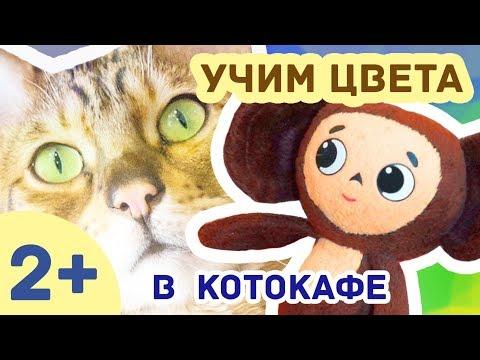 Развивающее видео для детей /// ЧЕБУРАШКА - Учим цвета в котокафе // СЕРИЯ 2!
