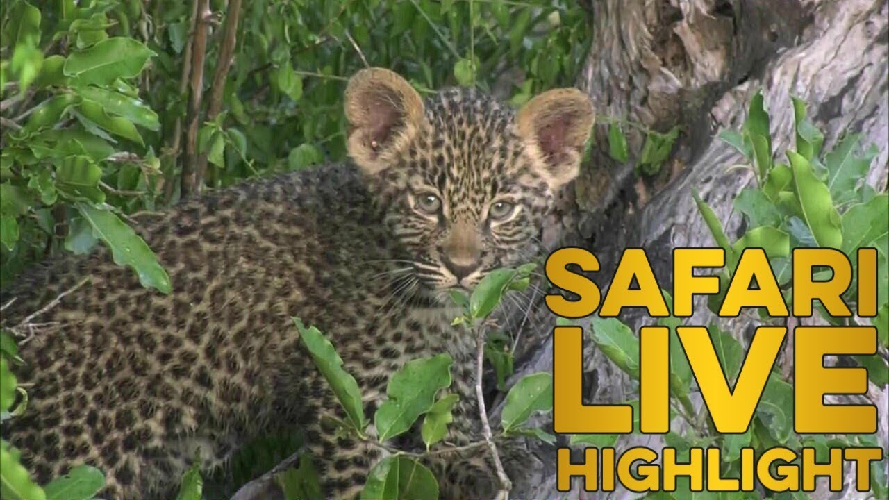 little-leopard-learning-valuable-life-skills-with-mom