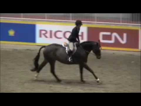 Orient - Gorgeous Hunter for Sale - RAWF Hack