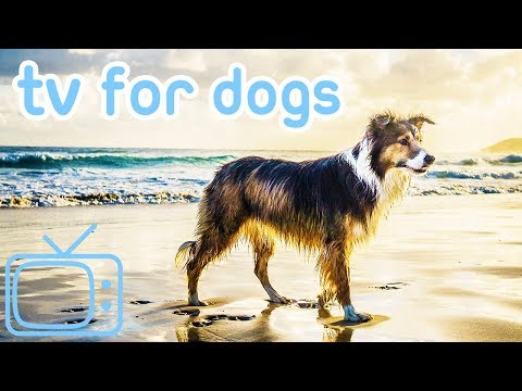Dog TV! Chill Out Entertainment for Dogs 2019!