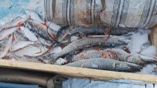 Отловились на 100 Такая Рыбалка Нам Нужна