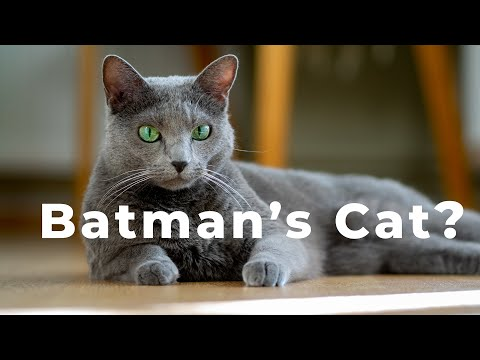 What is a Batman's Cat in an image - [Making mistakes in Photography is good!]