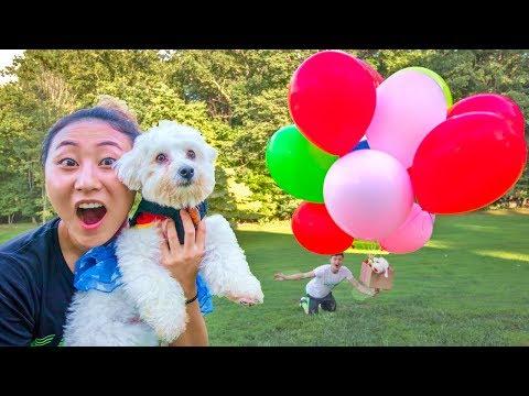 I MADE MY DOG FLY!!