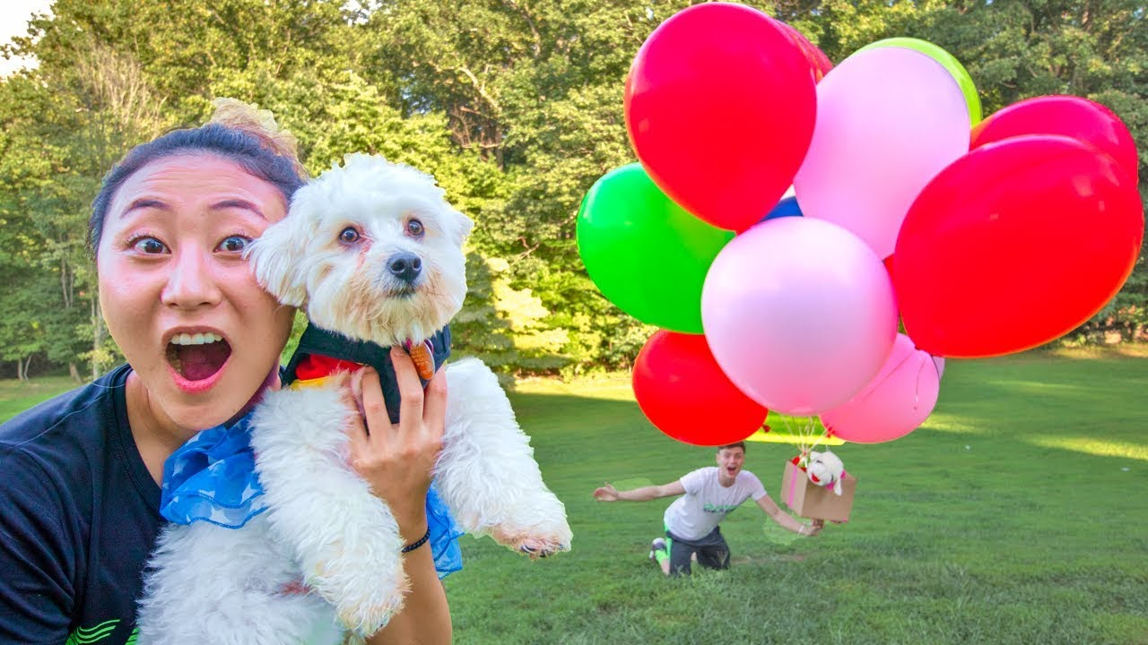 HOW MANY GIANT BALLOONS WILL IT TAKE TO FLOAT MY PUPPY?!