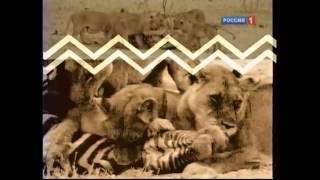 """Вторая заставка программы """"Диалоги о животных"""" (РТР; Россия-1, 21.09.1997 - 25.06.2011)"""