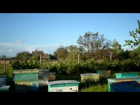 Белый мёд Блог Пчеловода