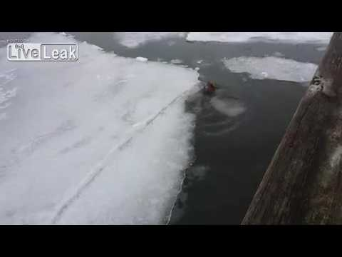 Nature Fail!!! Red Fox Falls Thru Ice and Freezes to Death in 4 minutes