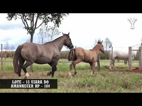 LOTE   15 UIARA DO AMANHECER RP   184