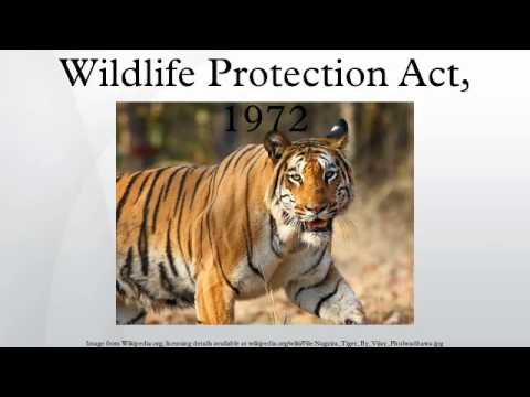 Wild animals pictures ppt #1