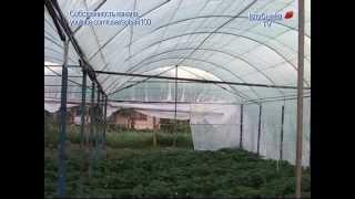 Секреты выращивания клубники #2