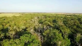 Beautiful Texas Farm in Thrall Texas ~ 2230 Country RD 471 For Sale ~ Enjoy this aerial drone video