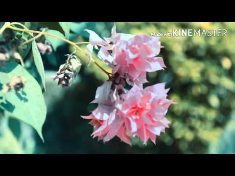 Our Nature is beautiful | Save our Environment | A short Video By RANSOUVI