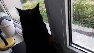 Моя кошка самая красивая!!!!!!!!(прикол)-смотреть до конца.