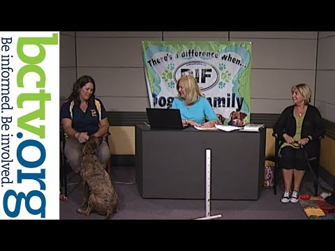 Dock Dogs and Portuguese Water Dogs 8-24-18