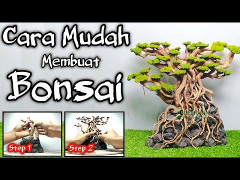 cara-membuat-bonsai-aquascape-dari-akar-senggani