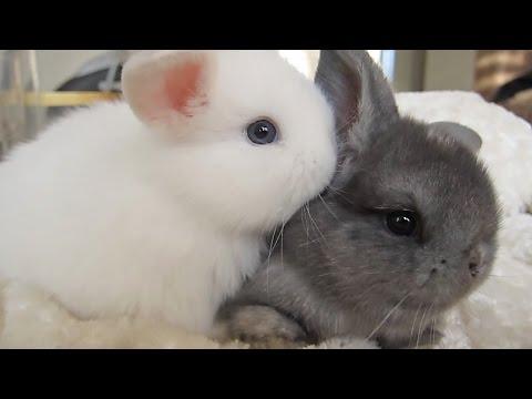 Delicious Bunny Ears!?