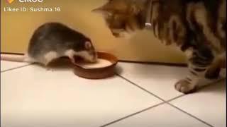 Fun cat | funny animals