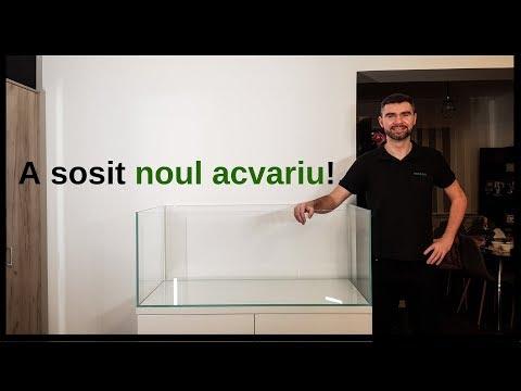 Acvaristica online dating