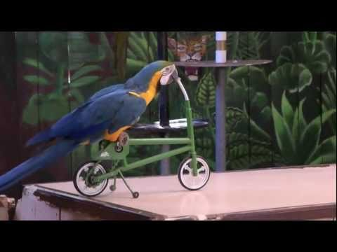 Funny parrot show...