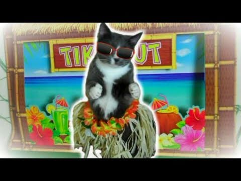 Kitty Cat Does the Hula Dance in a Grass Skirt