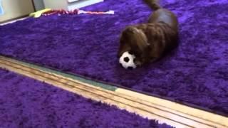 繭菓にボールを買った 鈴木繭菓 検索動画 10