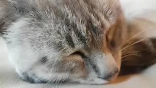 Что чувствует кот когда теряет друга?