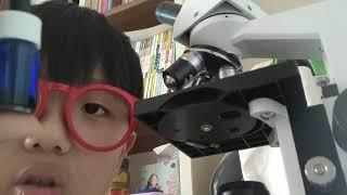 현미경 다루는 방법 2