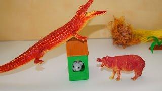 Животные. Крокодил и кошачий дом. Игрушки