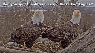 HOW TO TELL FREEDOM AND LIBERTY APART