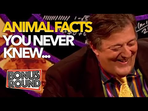 ANIMAL FACTS YOU