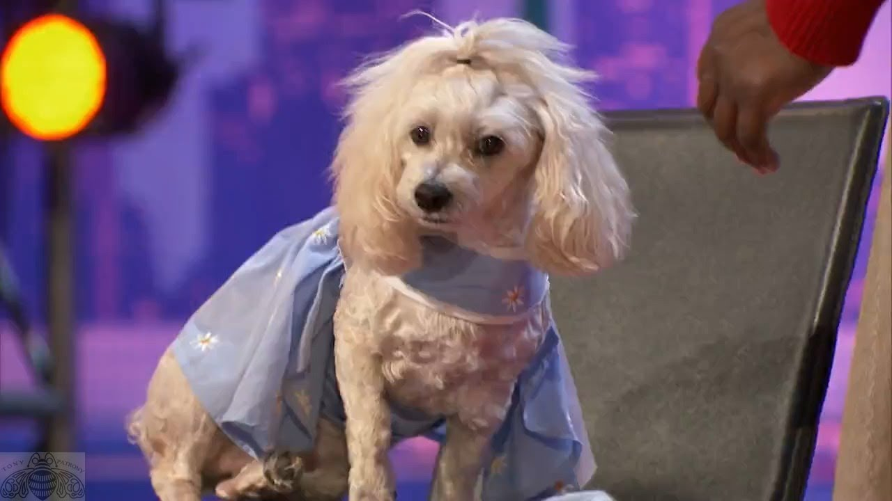 America's Got Talent 2017 WOW! Edna & Mia Moore the Counting & Reading Dog Full Audition S12E02 #1