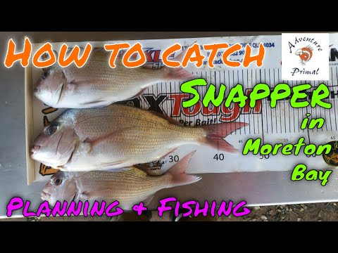 How To Catch Moreton Bay Snapper - Planning & Fishing