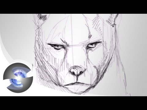 how to draw a cougar video