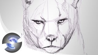 how to draw a cougar easy