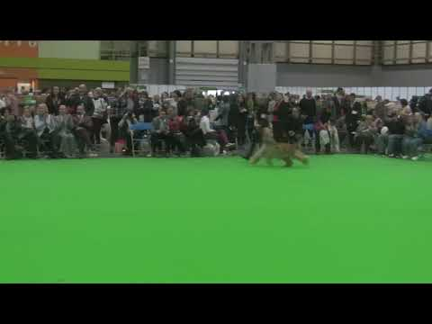 Crufts 2018 - Best of Breed