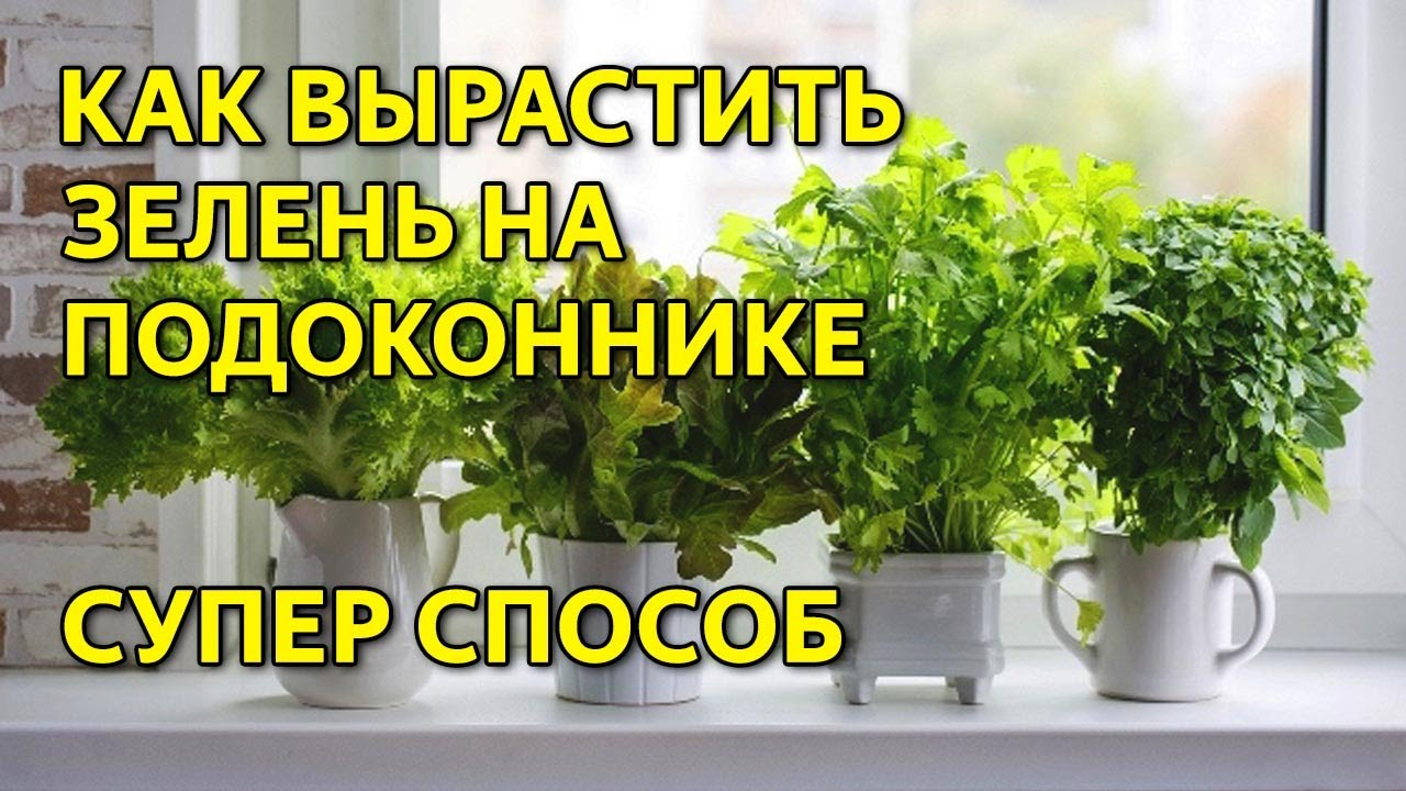 как выращивать гидропонику дома