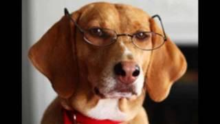 San Diego Karma Dog Training